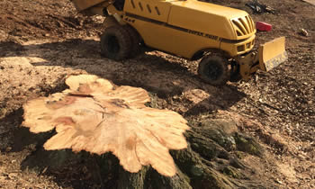 Stump Removal in Ogden UT Stump Removal Services in Ogden UT Stump Removal Professionals Ogden UT Tree Services in Ogden UT