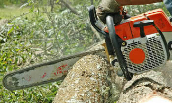Tree Removal in Ogden UT Tree Removal Quotes in Ogden UT Tree Removal Estimates in Ogden UT Tree Removal Services in Ogden UT Tree Removal Professionals in Ogden UT Tree Services in Ogden UT