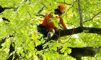 Tree Trimming in Ogden UT Tree Trimming Services in Ogden UT Tree Trimming Professionals in Ogden UT Tree Services in Ogden UT Tree Trimming Estimates in Ogden UT Tree Trimming Quotes in Ogden UT